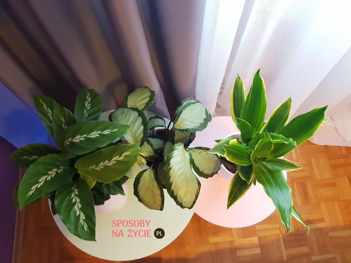 Tani Sposób Na Egzotyczne Kwiaty W Domu Sposoby Na życie