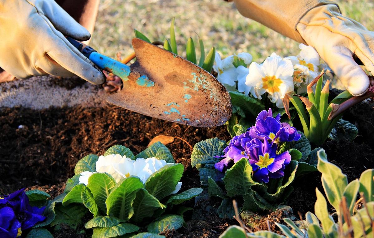jak przygotować ogród do wiosny