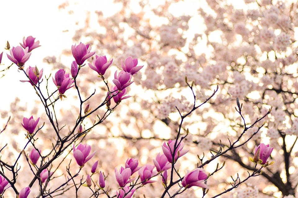 Pierwsze wiosenne kwiaty do domu, ogrodu, na balkon i taras