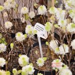 targi ogrodnicze gardenia 2019 relacja