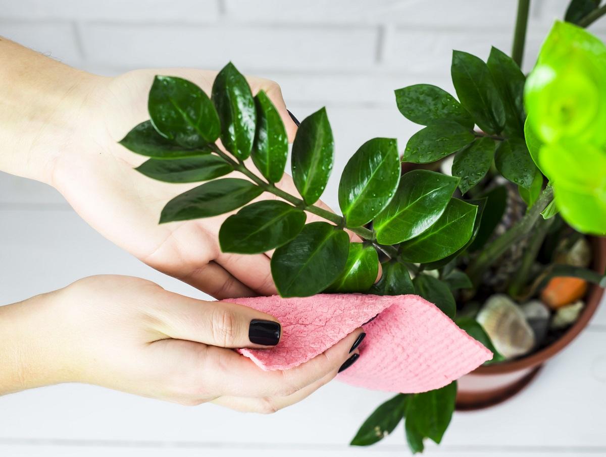 Mycie i czyszczenie roślin doniczkowych – kompendium wiedzy