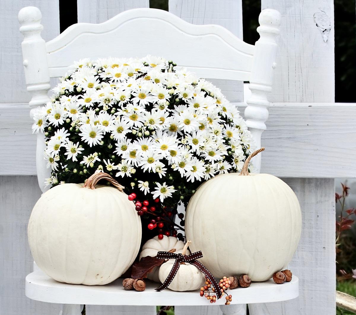Biała dynia modnym elementem jesiennych dekoracji