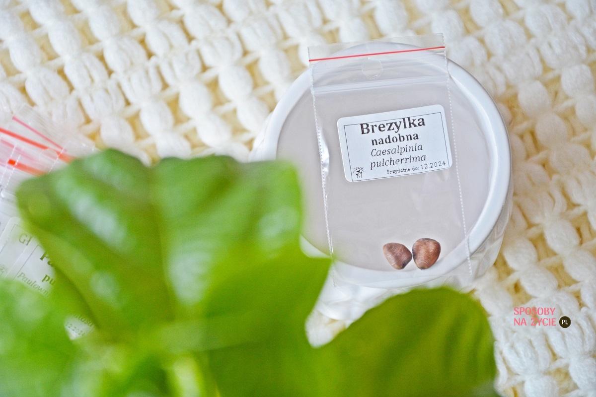 Brezylka nadobna (Caesalpinia Pulcherrima)
