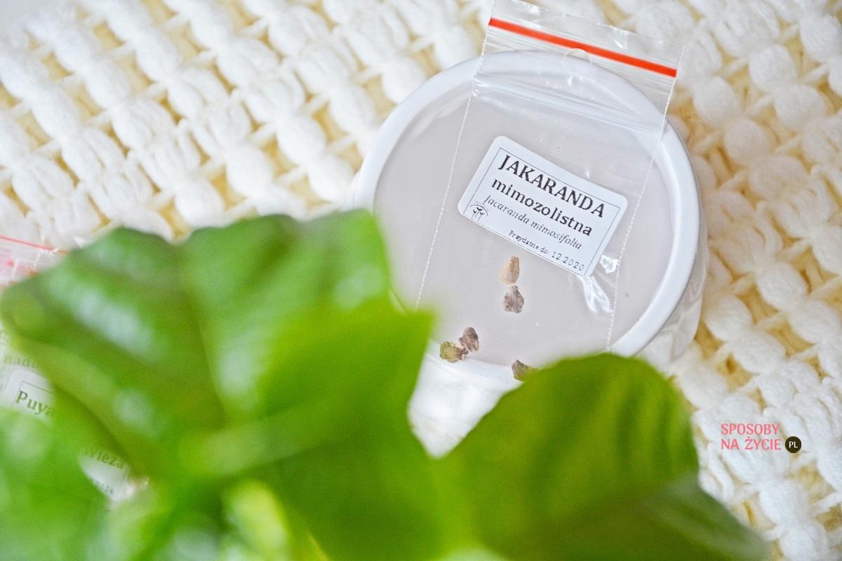 Jakaranda Mimozolistna