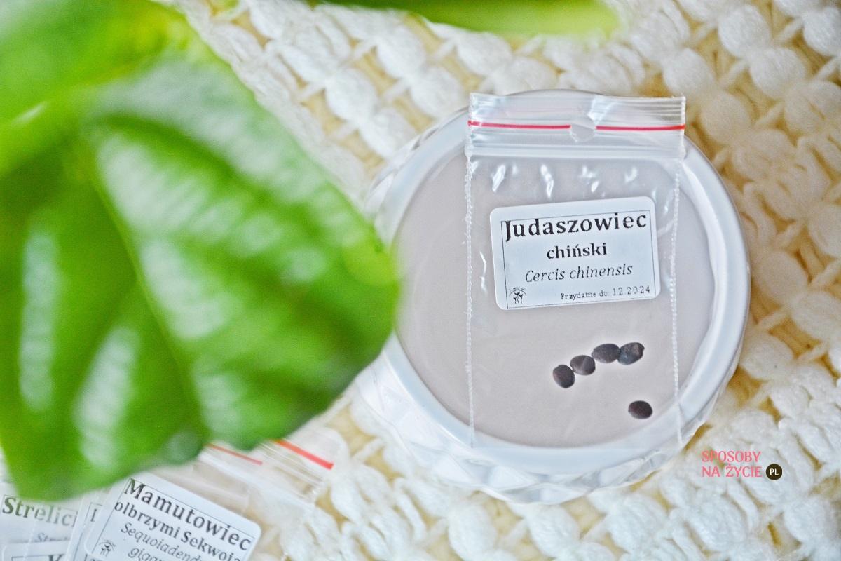 Judaszowiec chiński (Cercis chinensis)