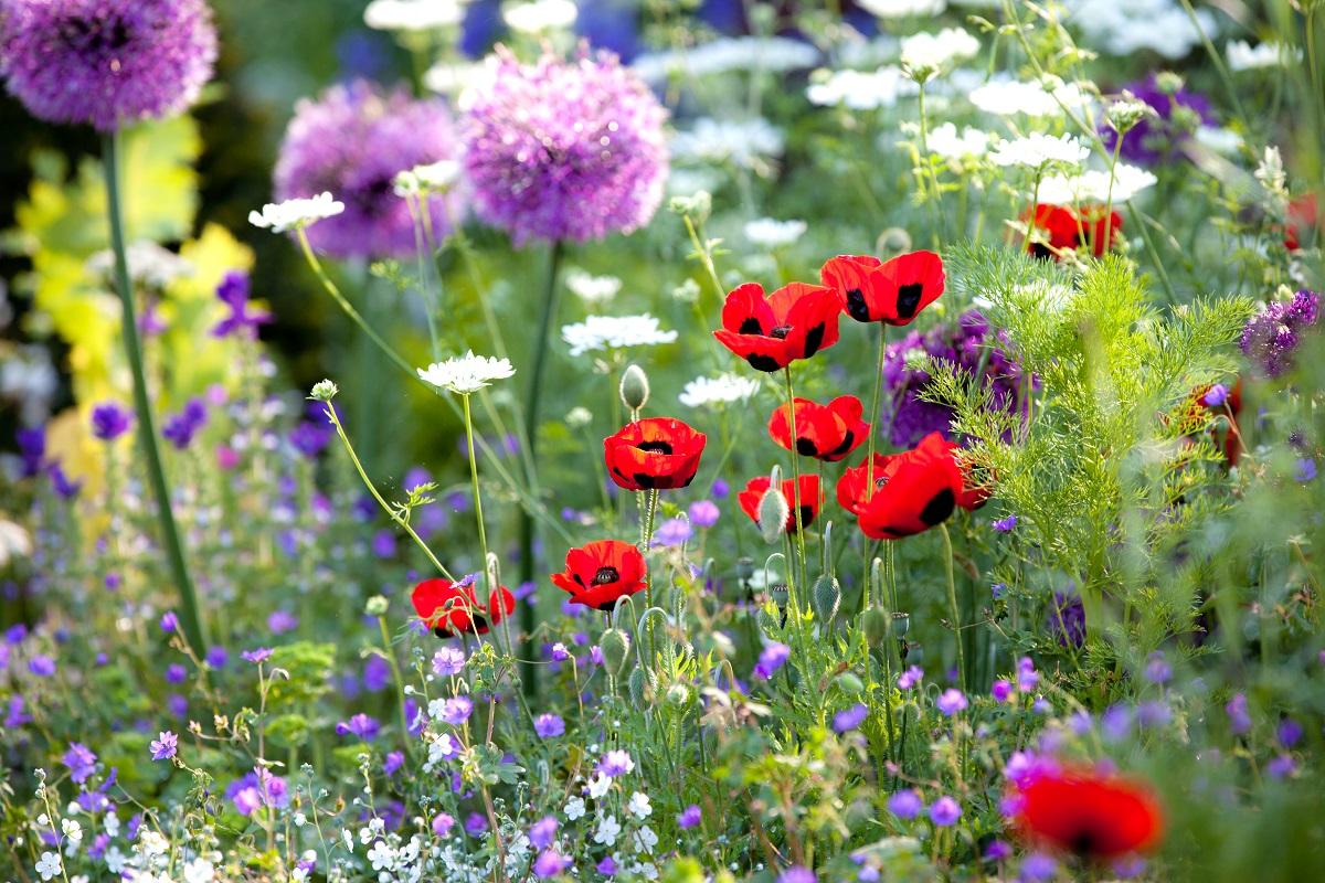 Zapomniane kwiaty z ogrodów moich babć