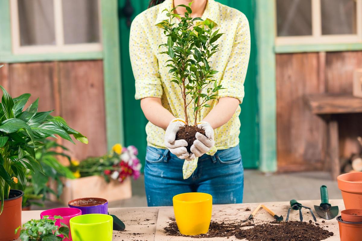 Wiosenna pielęgnacja roślin doniczkowych